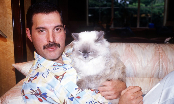 Suýt nữa đã có bài song ca kinh điển giữa Freddie Mercury và Michael Jackson nếu không vì... một con llama