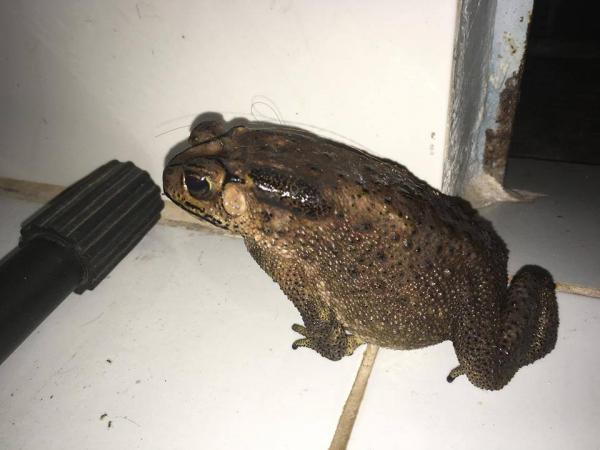 Mưa bão ngập lụt đã đi qua nhưng ám ảnh nhất vẫn là rắn, rết, gián, chuột trôi khắp nhà