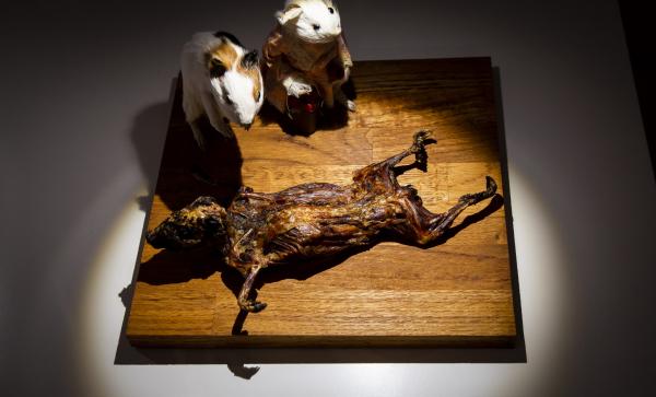 Thuỵ Điển mở cửa bảo tàng các món ăn 'nhìn là muốn nôn': Riêng Việt Nam đã có 4 món 'trình làng'