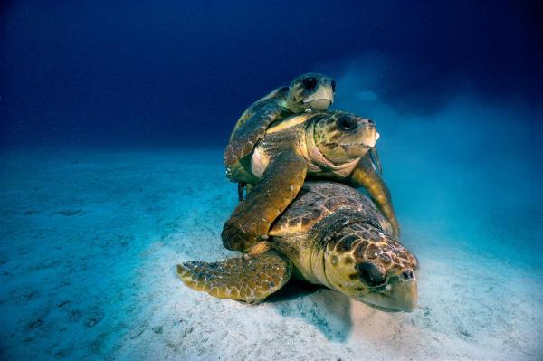 Thế giới phi thường dưới đáy đại dương