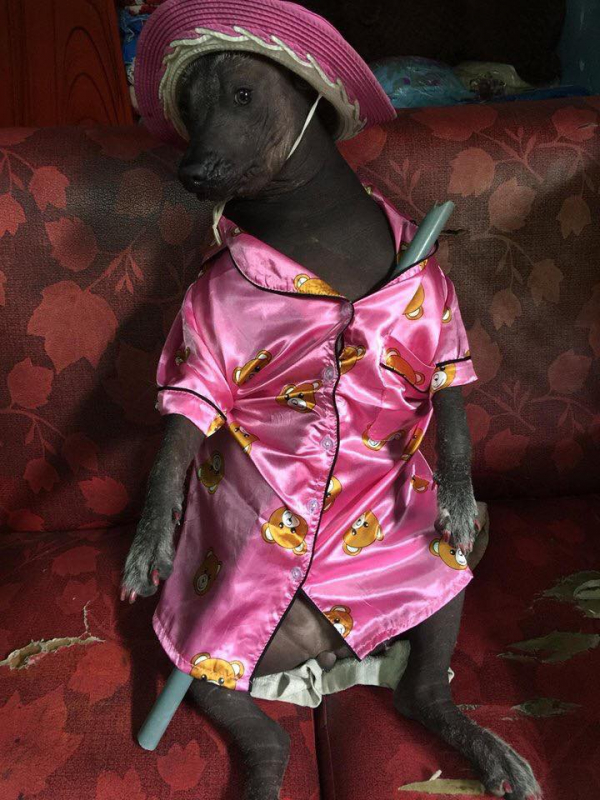 'Boss' bị 'sen' bắt mặc đồ ngủ rêu rao khắp nơi, cộng đồng mạng thắc mắc: Là chó hay heo?
