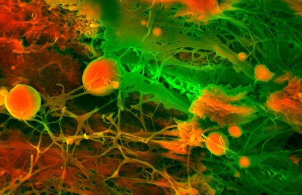 Nhìn các bộ phận trong cơ thể người qua lớp kính hiển vi: 'Tôi đang thấy cái gì thế này?'