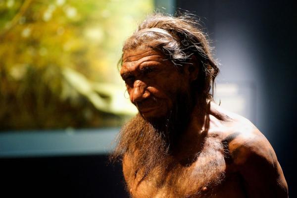 14 động vật cổ đại đã tuyệt chủng hàng triệu năm trước sẽ được hồi sinh