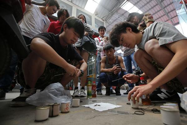 Dân nhà giàu Trung Quốc mua 'một vé về tuổi thơ' bằng cách bỏ 3,2 tỷ đồng đi cá cược chọi dế