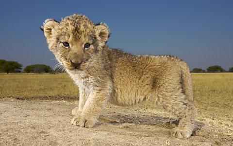 Tại sao động vật khi còn nhỏ lại thường rất dễ thương?