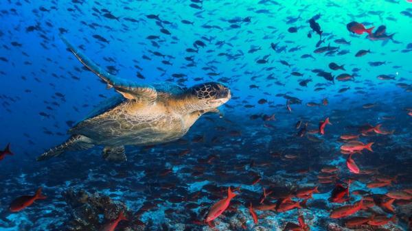 Vài điều cần biết để ngăn một cuộc 'đại tuyệt chủng' mới đang đến gần