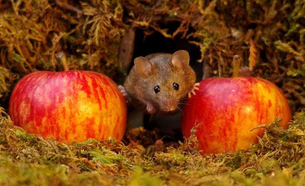 Tìm thấy gia đình chuột ở sau nhà, nhiếp ảnh gia xây hẳn cho chúng một ngôi làng xinh xắn