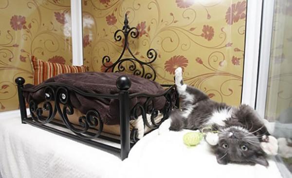 Loạt ảnh cho thấy cuộc sống thượng lưu của các 'boss' mèo