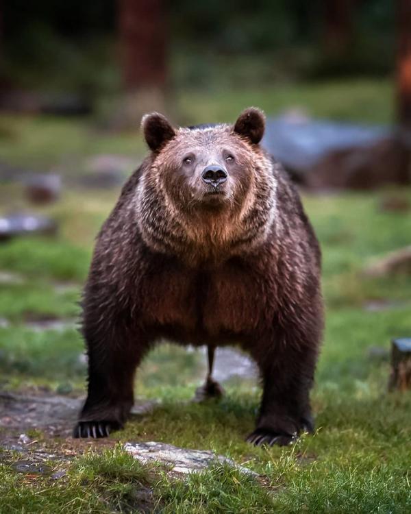 Thế giới cổ tích có thật trong những khu rừng Phần Lan