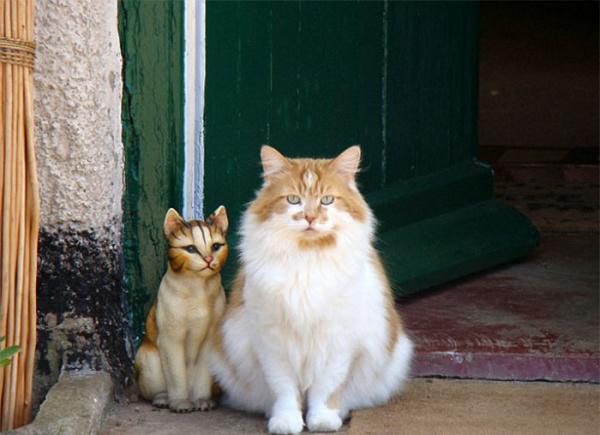 Chú mèo Anh trở thành vị 'boss' già nhất thế giới sau khi tổ chức 'mừng thọ' lần thứ 30