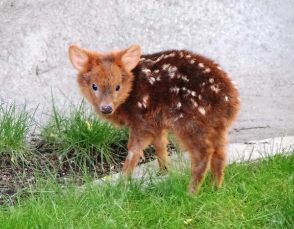 12 em bé động vật khiến bạn 'chết chìm' trong sự đáng yêu