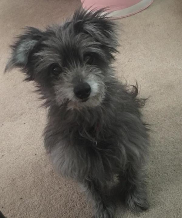 Cô gái nhận nuôi chú chó già bất ngờ phát hiện đó chính là cún cưng của mình khi còn bé
