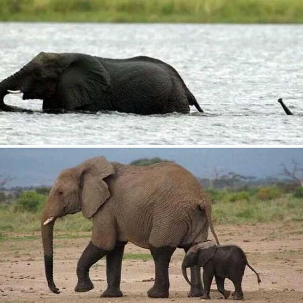 Những chú voi con đáng yêu đến mức bạn phải thốt lên 'Trời ơi tin được không?'