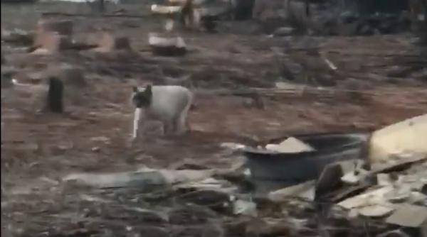 Chú mèo vui mừng chạy đến bên chủ sau khoảng thời gian bị lạc trong vụ cháy rừng
