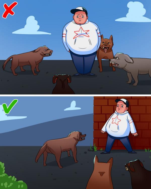 Vô tình 'lọt vào tầm ngắm' của chó dữ thì nên làm gì?