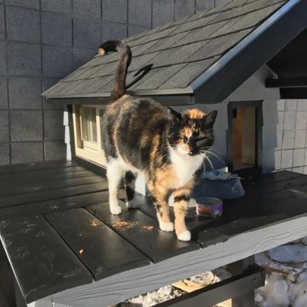 Chăm chỉ ghé thăm sở cảnh sát, chú mèo này được cấp luôn một căn nhà ấm cúng