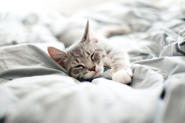 Lý do 'kì cục kẹo' khiến lũ mèo thích ngủ ké và tranh giường với chúng ta