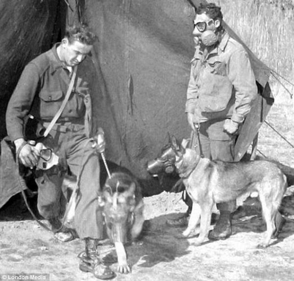Cuộc 'diệt chủng vật nuôi' kinh hoàng không kém từng diễn ra trong Thế chiến II