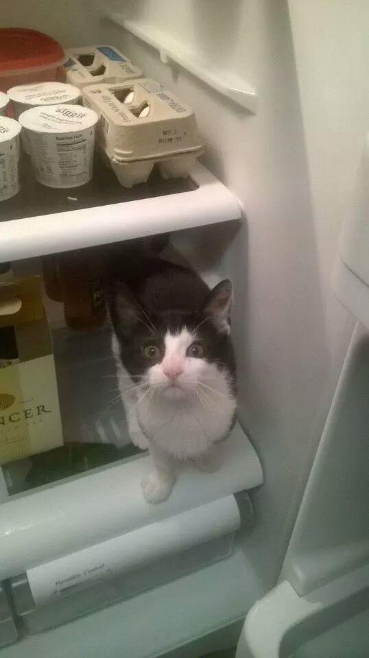 Nếu loài mèo phải đi làm, đây là cách chúng trải qua nỗi khổ của dân văn phòng
