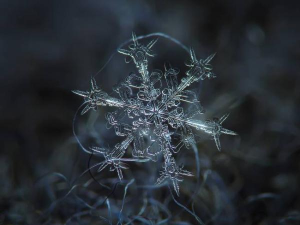 Cận cảnh cấu trúc tinh xảo của hoa tuyết - tuyệt tác hoàn mỹ nhất của tự nhiên
