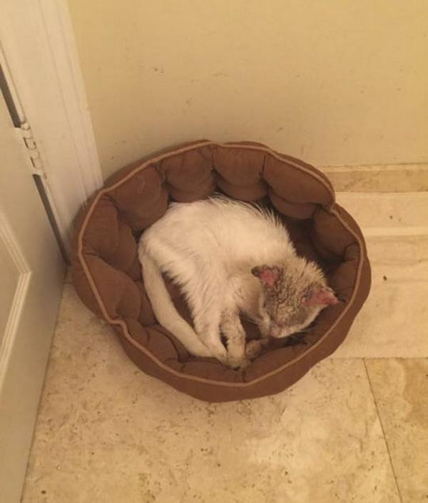 Từ chú mèo hoang tưởng mù loà đến 'mỹ miêu' có đôi mắt đẹp tới không ngờ