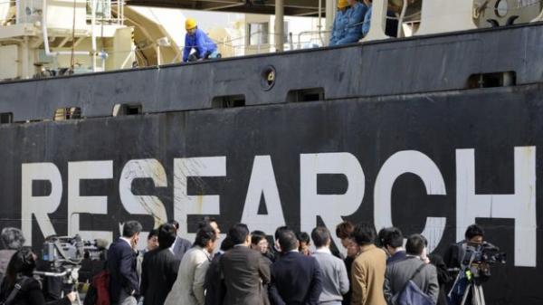 Nhật Bản cho phép ngư dân tiếp tục săn cá voi bất chấp luật pháp quốc tế