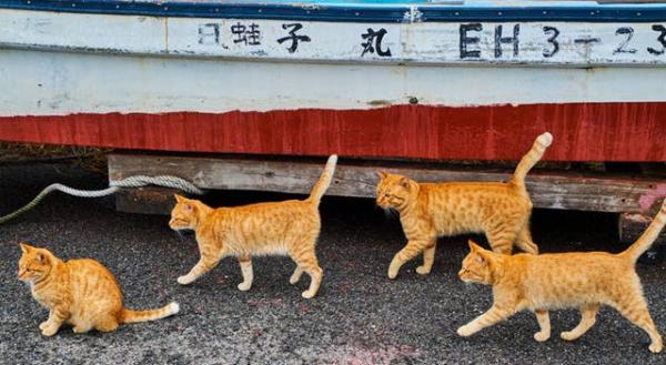 Theo chân những chú mèo hoang để thấy thế giới này tươi đẹp như thế nào
