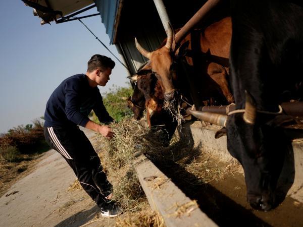 Võ thuật đấu bò: Môn thể thao bị lên án nhưng vẫn 'nở rộ' tại Trung Quốc