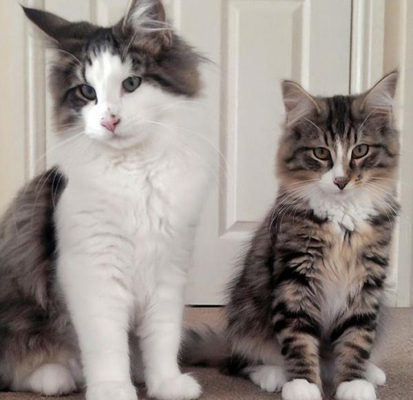 Chú mèo 'đi bụi' 14 tháng được tìm thấy đang 'phè phỡn' tại nhà máy sản xuất thức ăn thú cưng