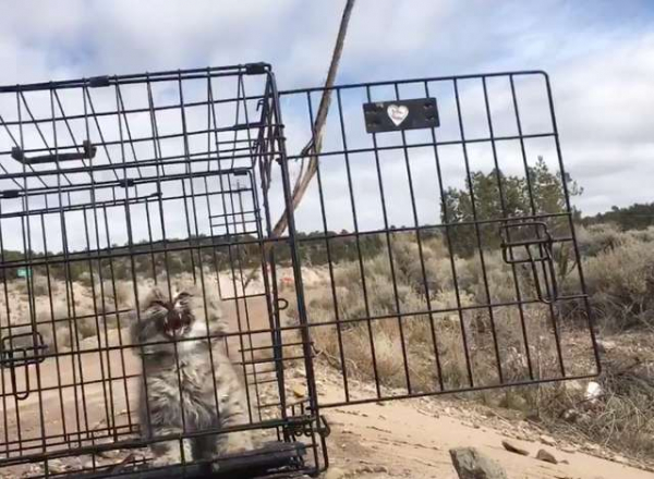 Đây là những gì bạn nhận được sau khi thả 'con mèo đáng ghét nhất thế giới' về tự nhiên