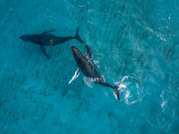 Thiên nhiên diệu kỳ qua loạt ảnh động vật hoang dã đẹp nhất năm 2018