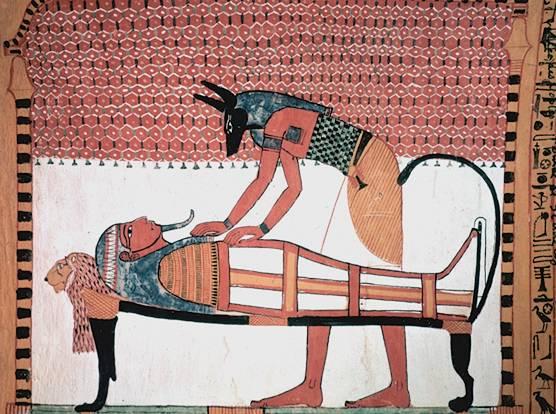 Loài báo từng được thuần hóa làm vật nuôi trong nhà từ thời Ai Cập cổ đại?