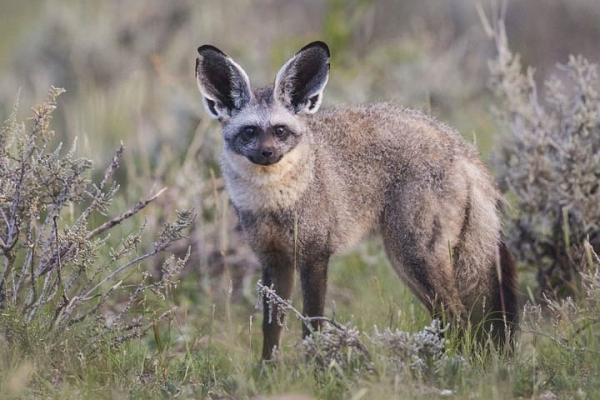 30 loài động vật vừa lạ vừa quý có thể bạn chưa từng nghe đến (P2)
