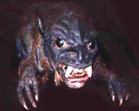 Sự thật về 7 sinh vật kỳ lạ và đáng sợ nhất từng được tìm thấy