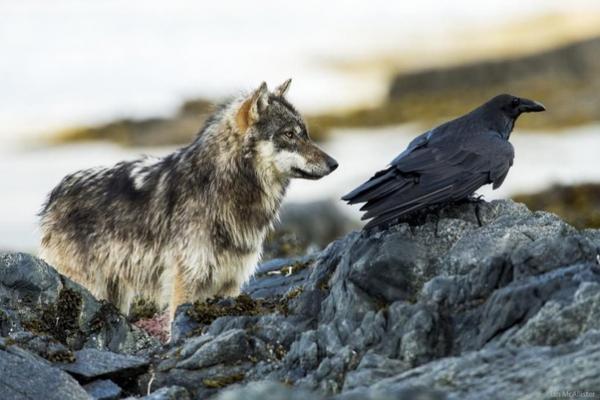 Thời buổi khó khăn, ngay cả những kẻ thù trong tự nhiên cũng phải trở thành đồng đội với nhau