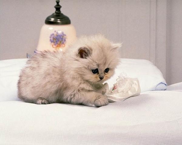 Nếu chết một mình ở nhà, thú cưng bạn nuôi sẽ ăn xác bạn bắt đầu từ mặt trở đi