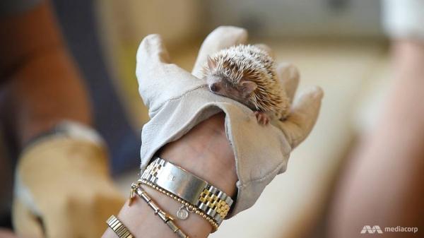 Ở Nhật Bản, rất nhiều loài động vật cũng có thể trở thành... nhân viên quán cà phê