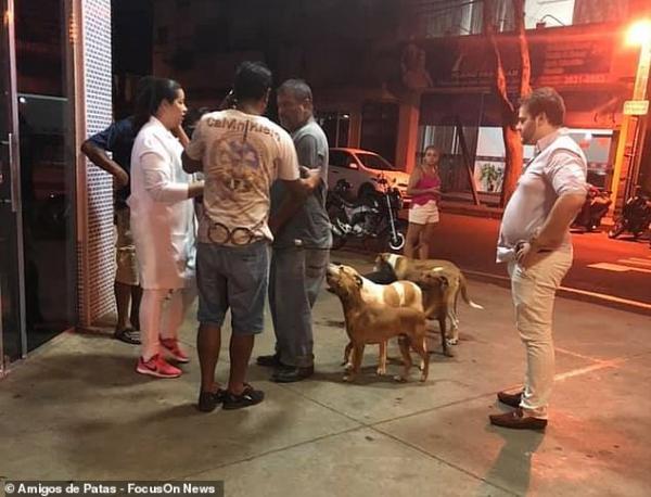 Xúc động chuyện những 'chú chó Hachiko' của Brazil chờ chủ nhân nhiều ngày trước cổng bệnh viện