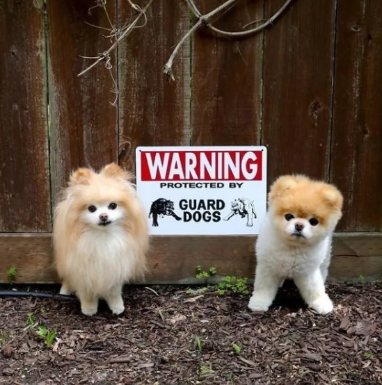 Loạt biển báo 'Cẩn thận chó dữ' xem đã thấy sai: 'Cute thế này mà cứ bảo người ta ác là sao?'