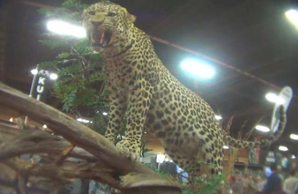 Khung cảnh đáng sợ tại lễ hội dành cho những tay săn bắn động vật hoang dã