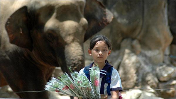 'Cú và chim Se Sẻ': Gửi chút nhớ thương đến bộ phim Việt trong trẻo hiếm hoi của ngày xưa ấy