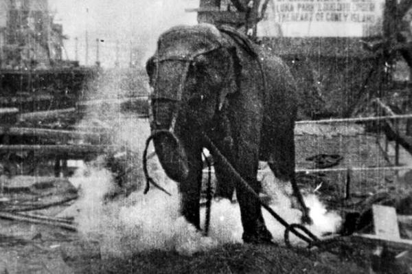 Dùng voi giẫm chết kẻ thù - Cách hành quyết và tra tấn tàn độc của người xưa
