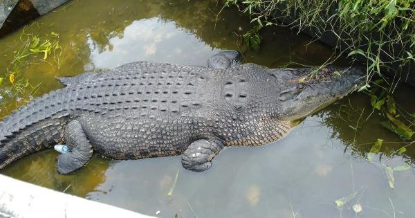 Cá sấu nhảy lên bờ tường kéo nhà khoa học xuống rồi ăn thịt