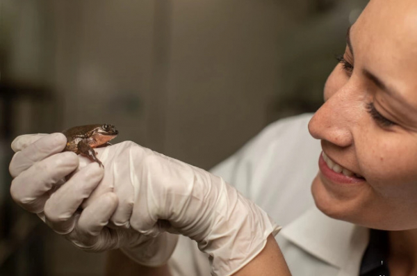 Chú ếch 'cô đơn nhất thế giới' cuối cùng cũng có bạn gái