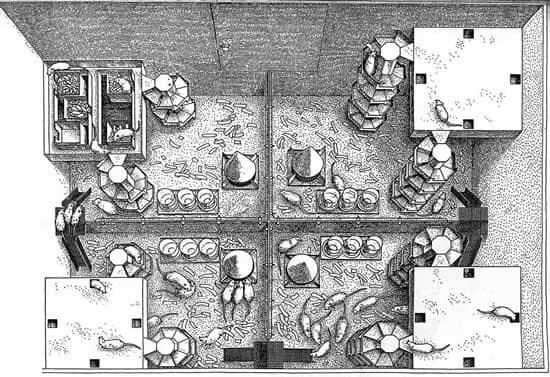 Thí nghiệm Calhoun: Cho lũ chuột sống ở 'thiên đường', vì sao chúng lại giết lẫn nhau và diệt vong?