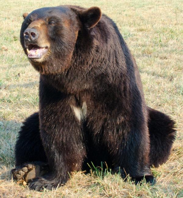 Cậu bé 3 tuổi an toàn sau hai ngày đi lạc trong rừng nhờ 'bạn gấu bự' tận tình chăm sóc