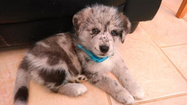 Bạn đã bao giờ gặp những chú 'cún con Oreo' này chưa?