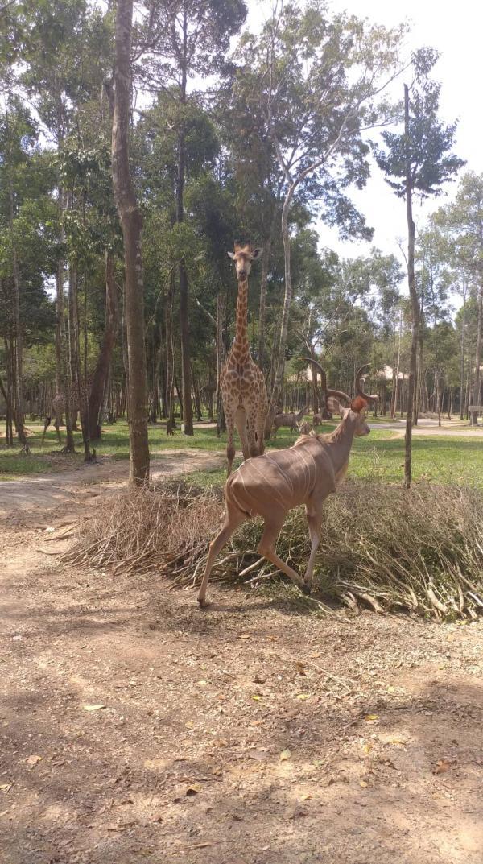 Chàng nhân viên vườn thú hoang dã lớn nhất Việt Nam và loạt chuyện 'hậu trường' lần đầu mới kể