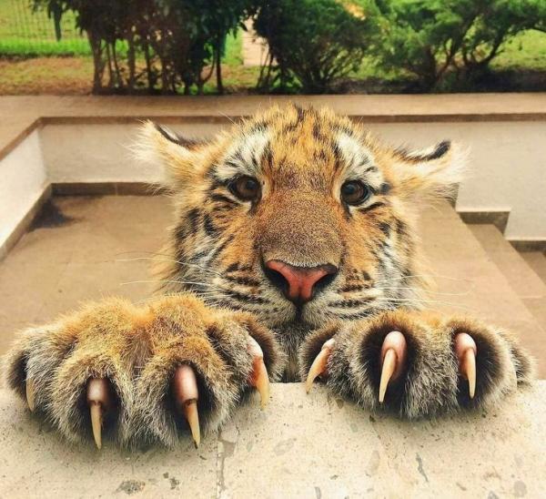 Chùm ảnh động vật đáng yêu tiếp sức cho những người đang sợ phải đi học đi làm sau kỳ nghỉ lễ