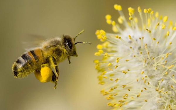 Chúa đã nghĩ gì khi ngài sáng tạo ra các loài sinh vật này nhỉ?